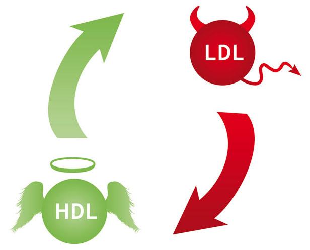 Colesterolo buono (HDL)